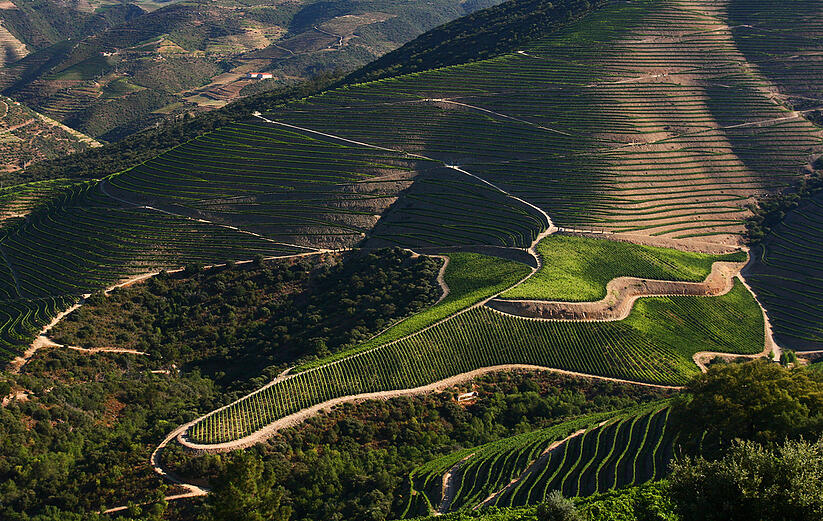 visit to douro wine region
