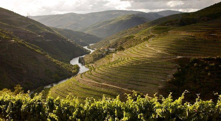 wine tasting tours in douro