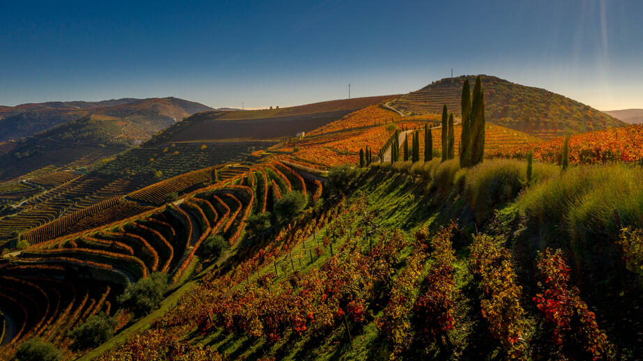 Douro Harvest