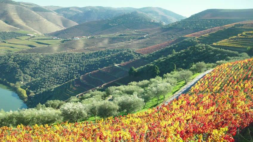 Tour in Douro Valley