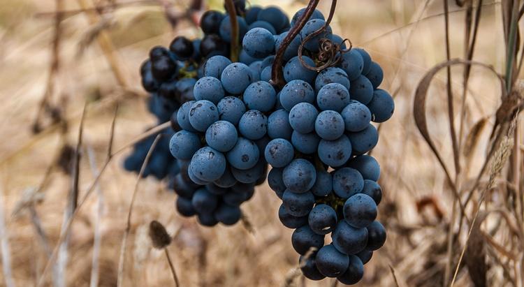 A_Serenada_Enoturismo_wine