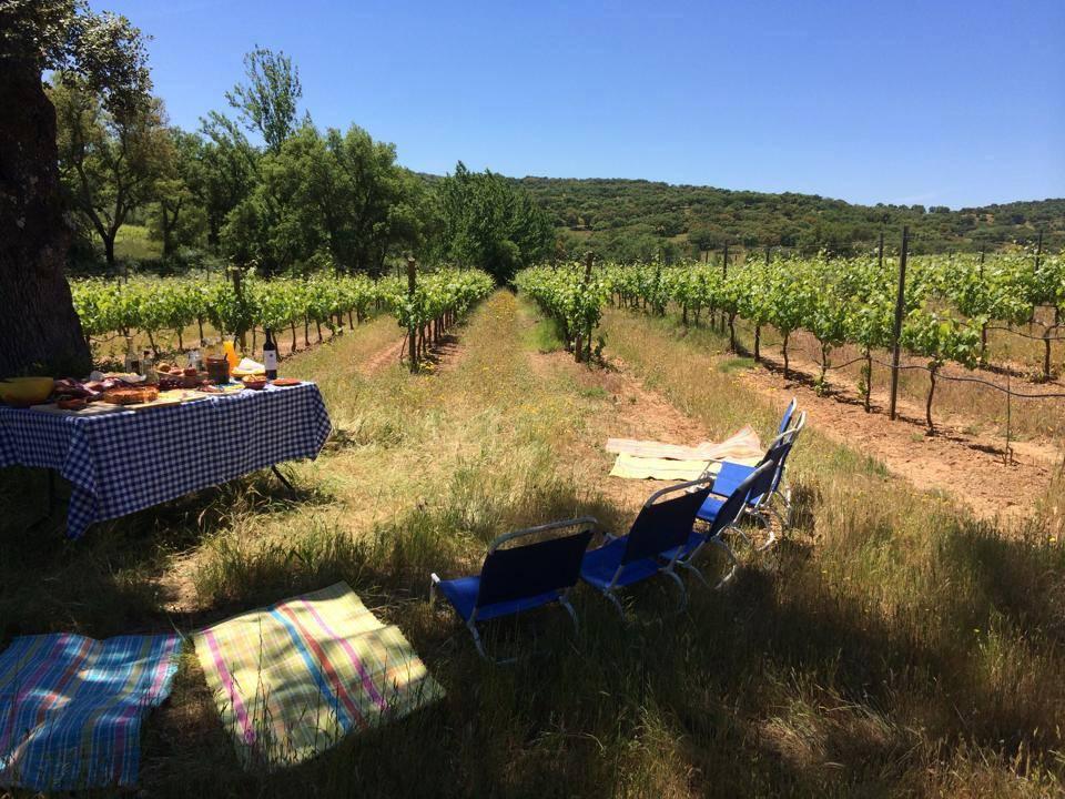 picnic, alentejo, monte da ravasqueira, vineyards