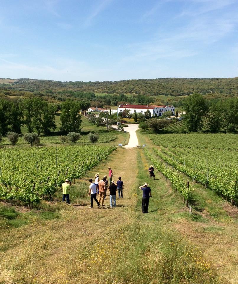 monte_da_rasvasqueira, best wine tours in alentejo, best wines from alentejo, monte da ravasqueira wines