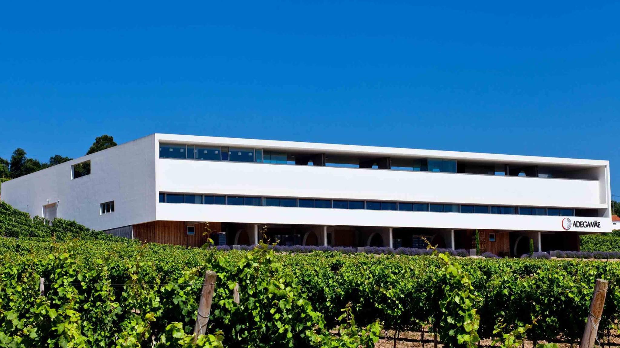 adega mãe, best wineries, wine tours in lisbon, wineries near lisbon, taste wine in lisbon, adega mae wines, dory, reserva, colheita