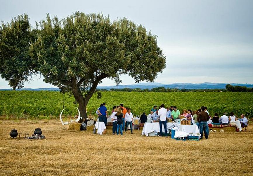picnic, winery, vineyard, alentejo, adega mayor