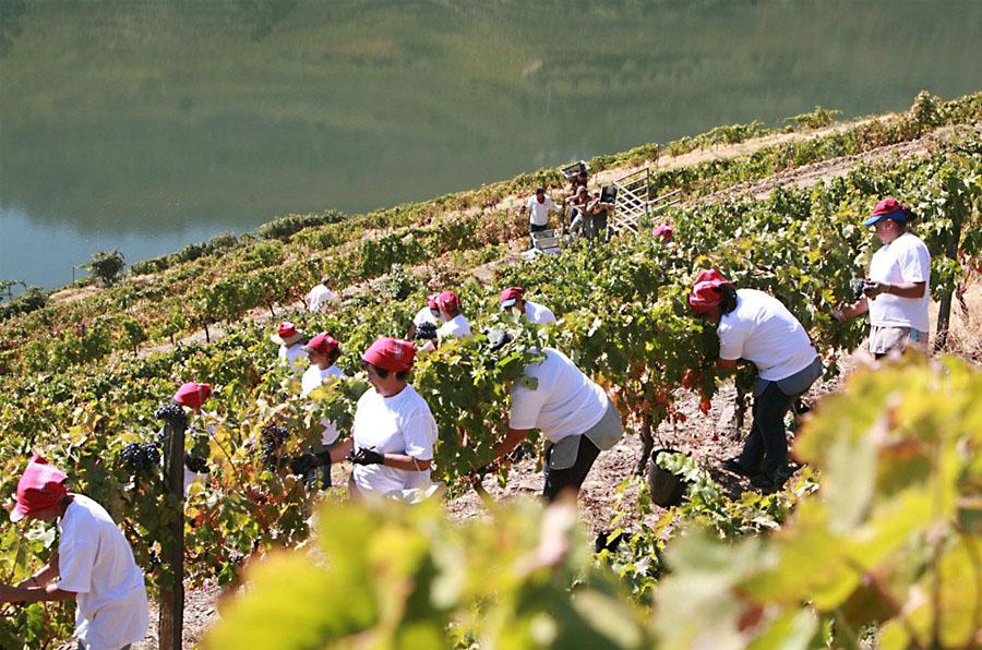 Facts About Portuguese Wine - Douro Region Port Wine Production