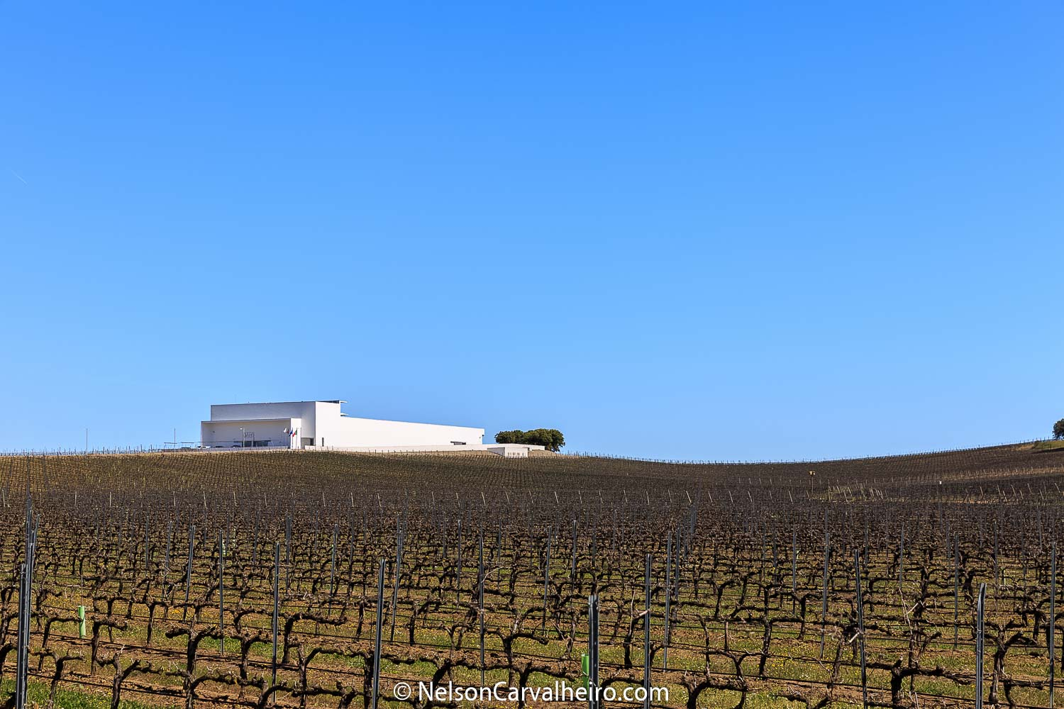 Alentejo Wine Travel Guide - Adega Mayor