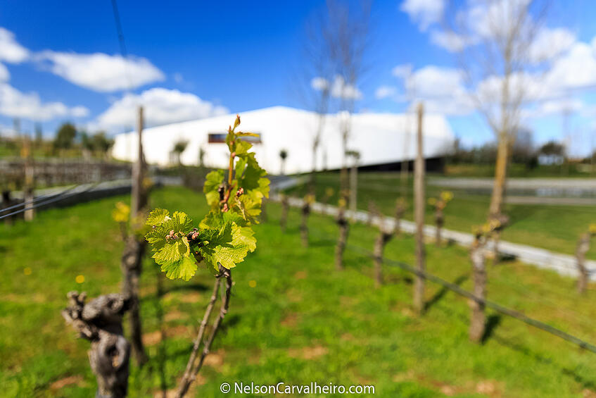 Alentejo Wine Travel Guide - L'AND Vineyards Hotel