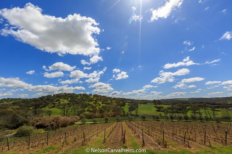 Holidays in Alentejo - Vineyard