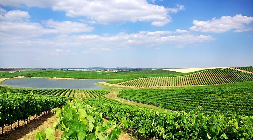 Portugal Wine Regions - Alentejo