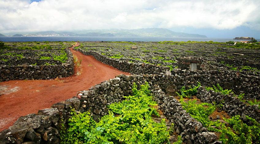 Portugal Wine Regions - Azores