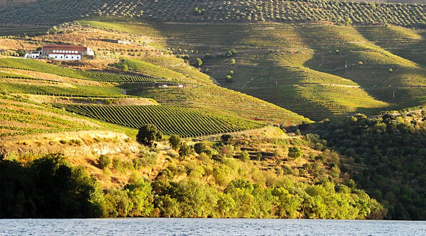 Portugal Wine Regions - Dão-Lafões