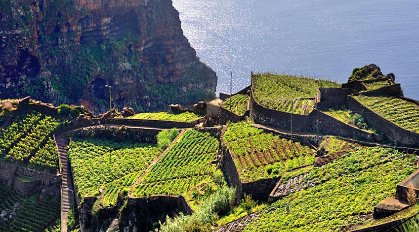 Portugal Wine Regions - Madeira