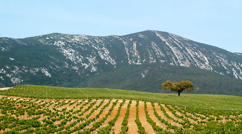 Portugal Wine Regions - Peninsula de Setubal