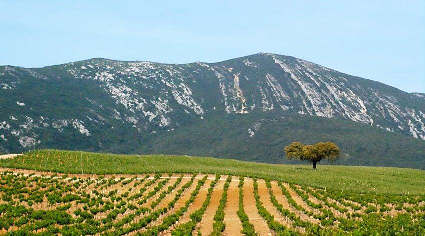 Portugal Wine Regions - Peninsula de Setubal