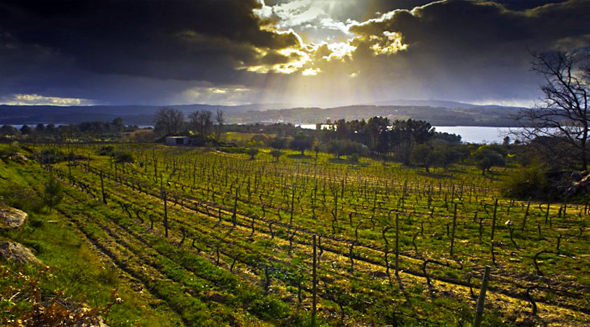 Portugal Wine Regions - Távora-Varosa