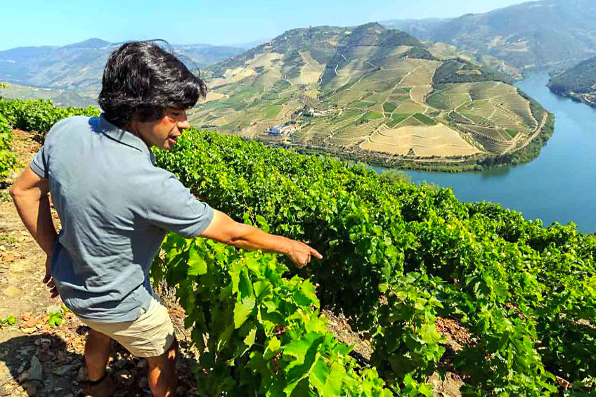 5 Things to Do in Portugal in the Summer - Wine Tour