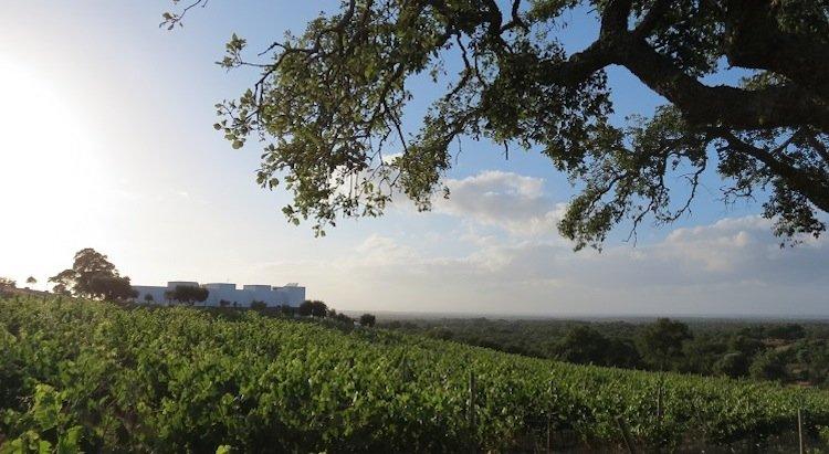 best wine hotels in portugal, boutique hotel in alentejo, country hotel in alentejo, serenada enoturismo, portuguese wine regions, península de setúbal, tour in portugal