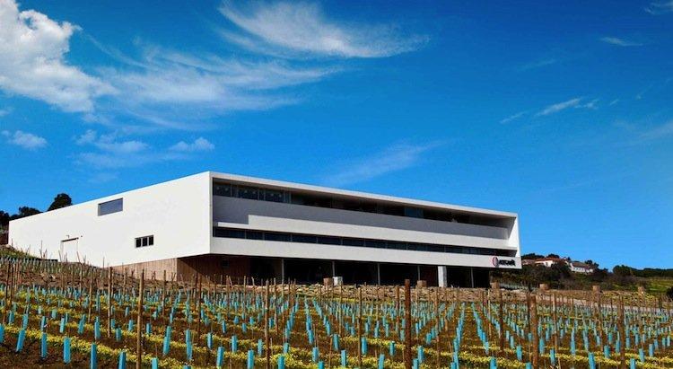 Tours in Lisbon - Wineries in the Lisbon Region - Adega Mãe