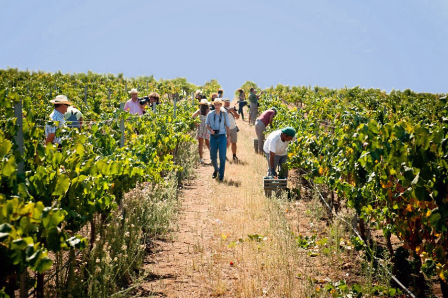 Why Book a Wine Tours?
