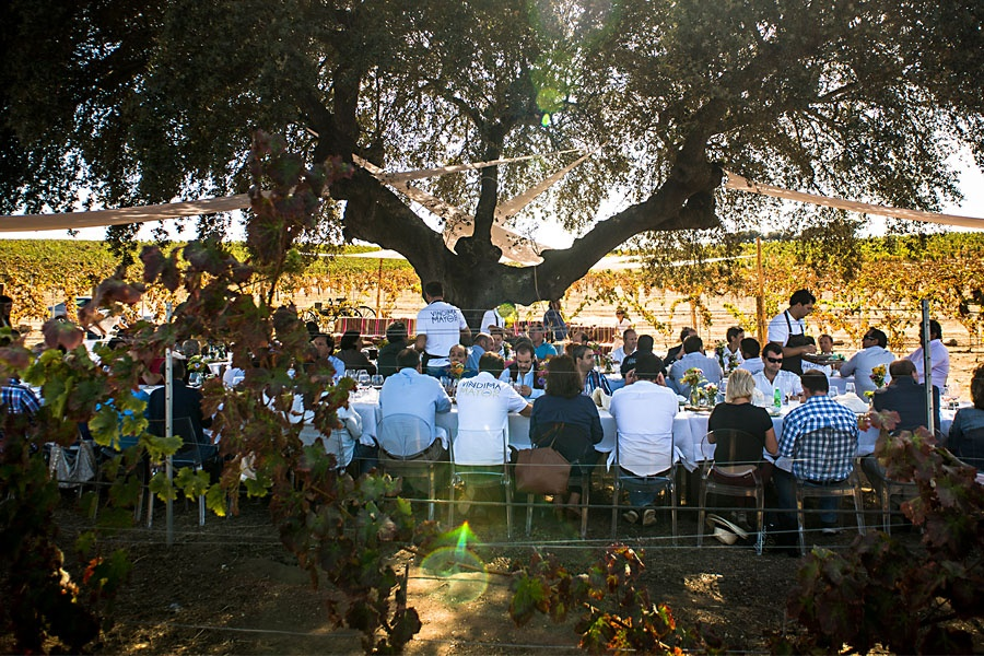 Wine Tour - Lunch in the Vineyards
