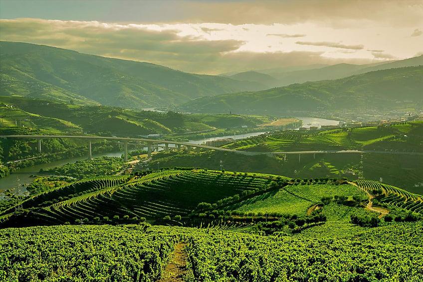 Book Wine Tour - Douro Valley