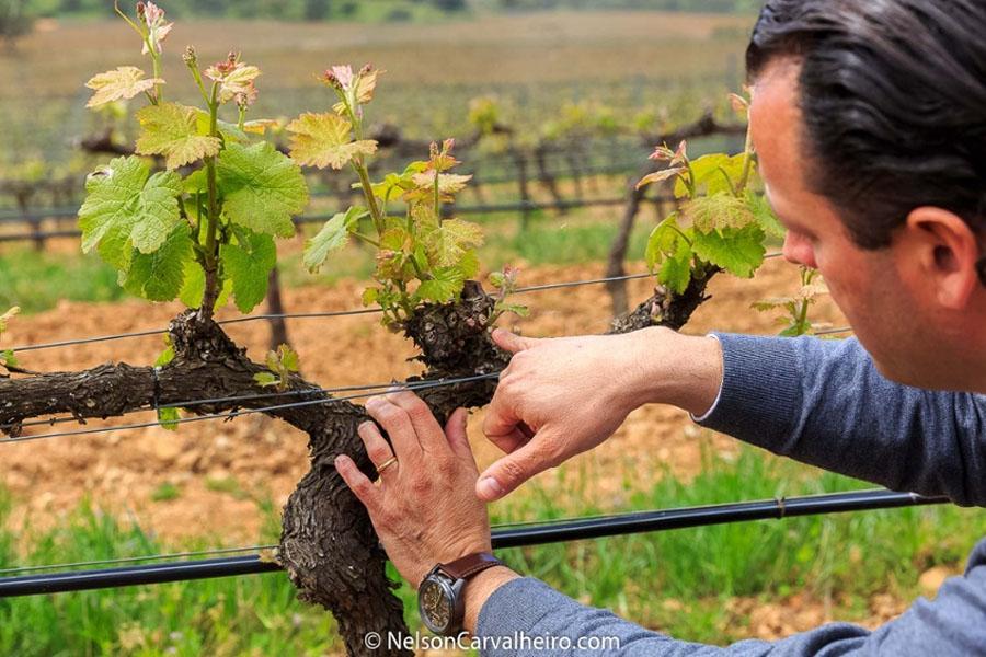 Portuguese Wines & Vineyards