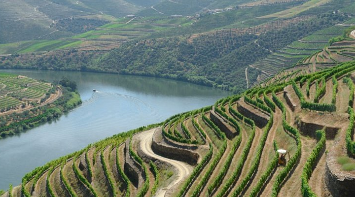 douro-valley-vineyards.png