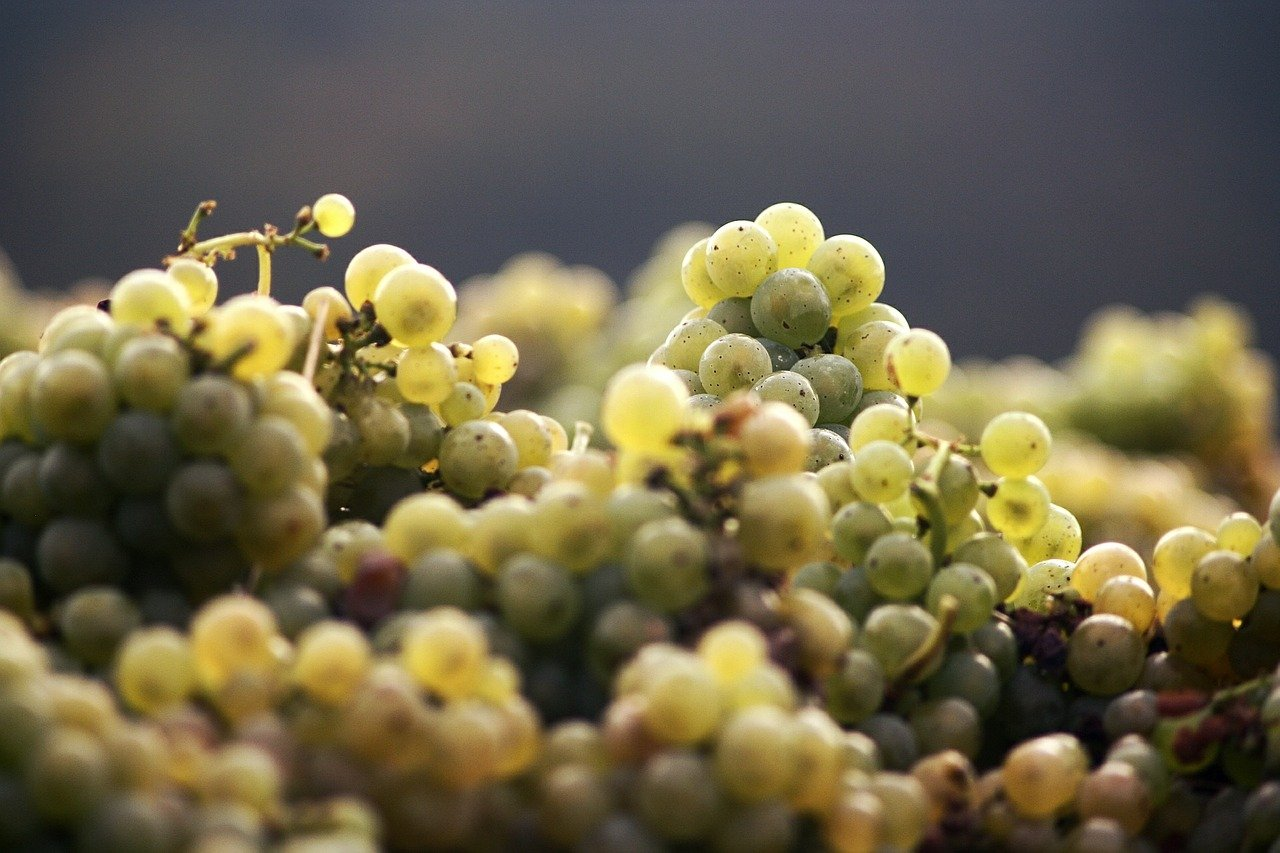 grapes-546309_1280