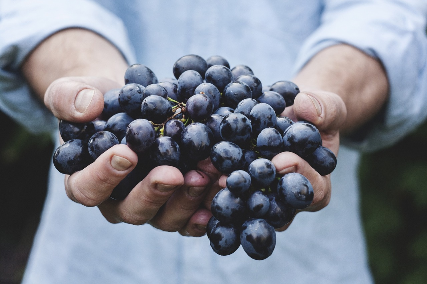 grapes-690230_1280-1