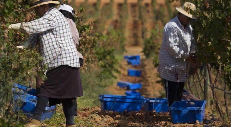 herdade_dos_grous, harvest, tour in alentejo, circuit in alentejo, wine estates, wine tasting, wines from alentejo