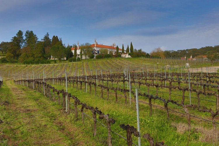 monte_da_ravasqueira, tour in alentejo, circuit in alentejo, wine estates, wine tasting, wines from alentejo