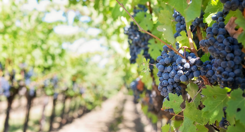 wine tours in portugal