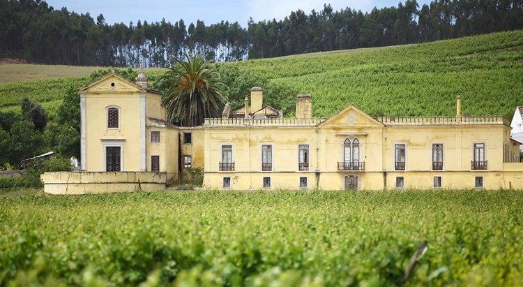 quinta_do_gradil, taste wine near lisbon