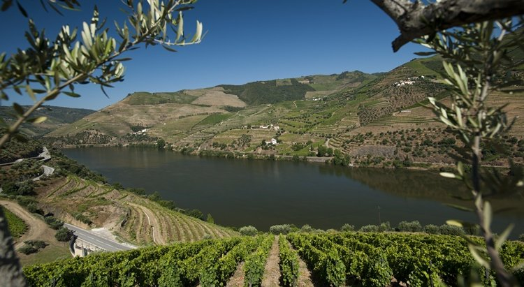 tour in douro, quinta_do_seixo