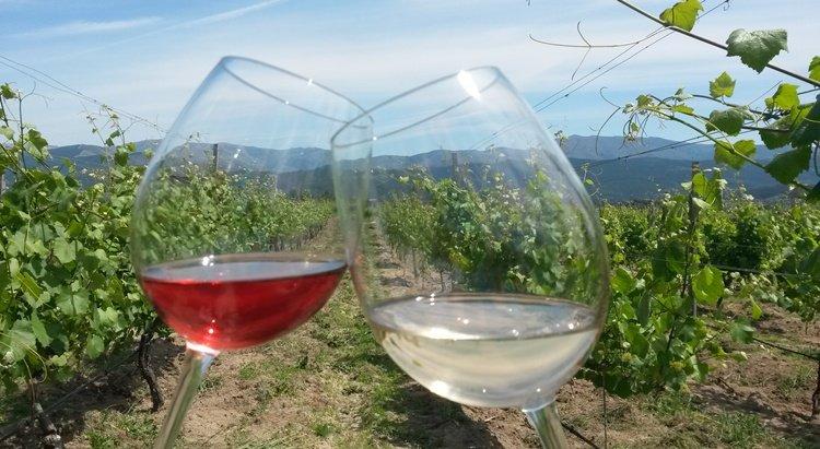quinta_santa_cristina, wine tasting, vineyards, vinho verde, picnic