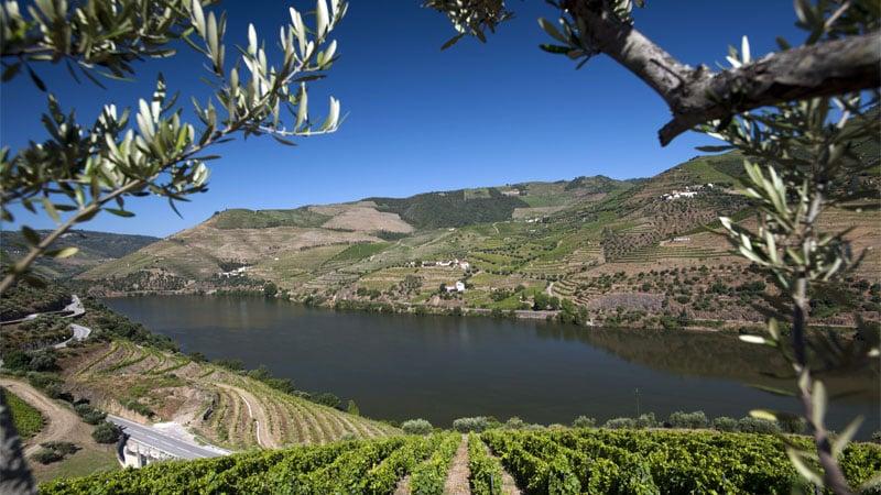 Douro Valley Harvest Season - Quinta do Seixo