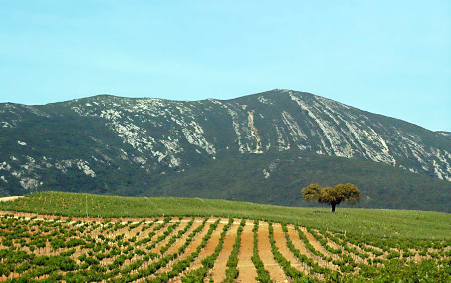 Setubal Peninsula Top Destinations - Wine Region