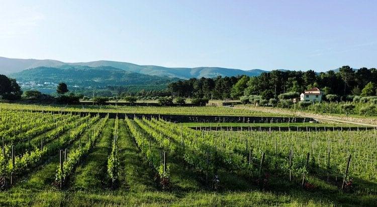 madre de água rural hotel, picnic, vineyard, portugal