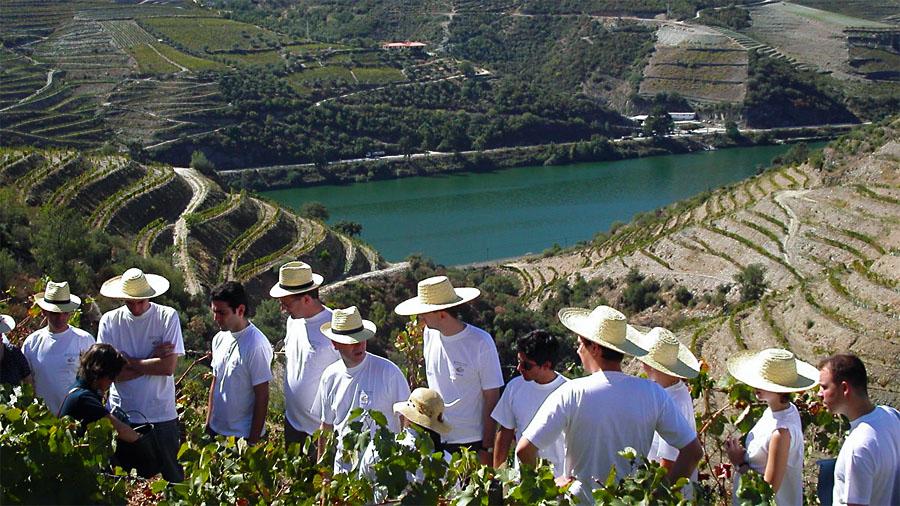 Wine Tour Harvest Experience
