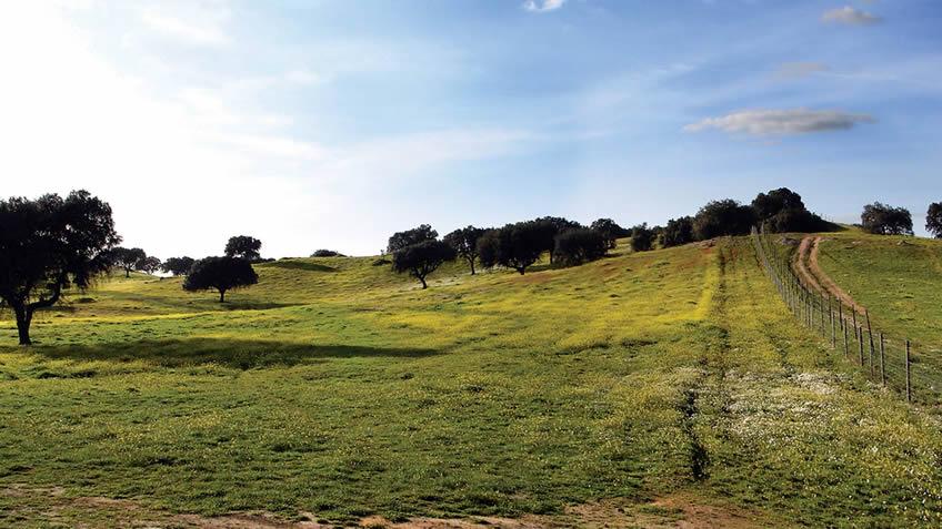 Convento do Espinheiro; Alentejo; Spring Break