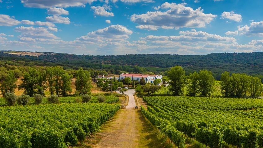 Monte da Ravasqueira; ALentejo Wine Route