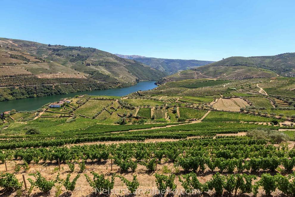 nelsondouro2, douro, douro valley, douro guide, wine travel guide
