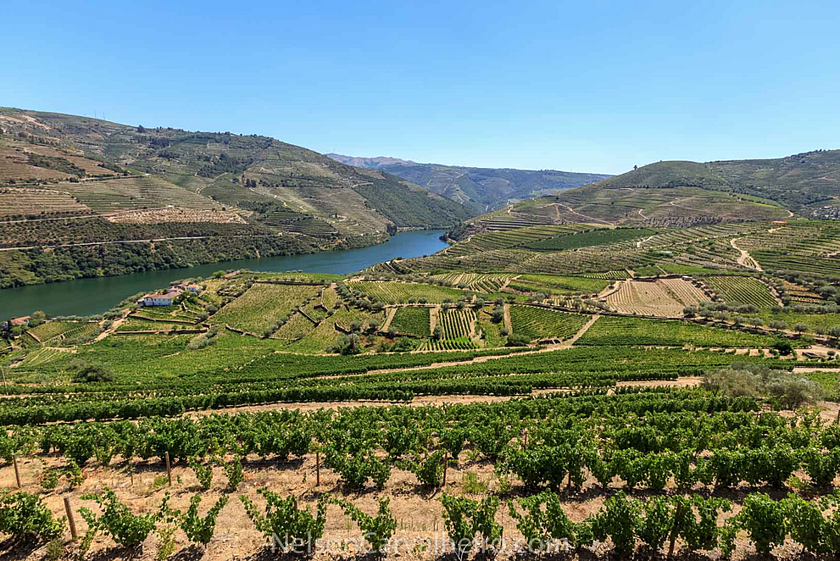 nelsondouro2, douro, douro valley, douro guide, wine travel guide