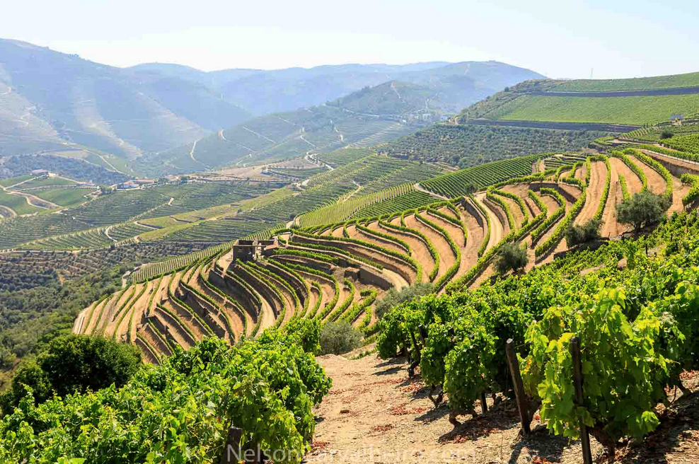 nelsondouro21, nelsondouro27, best wine experiences in douro, wine tastings in douro