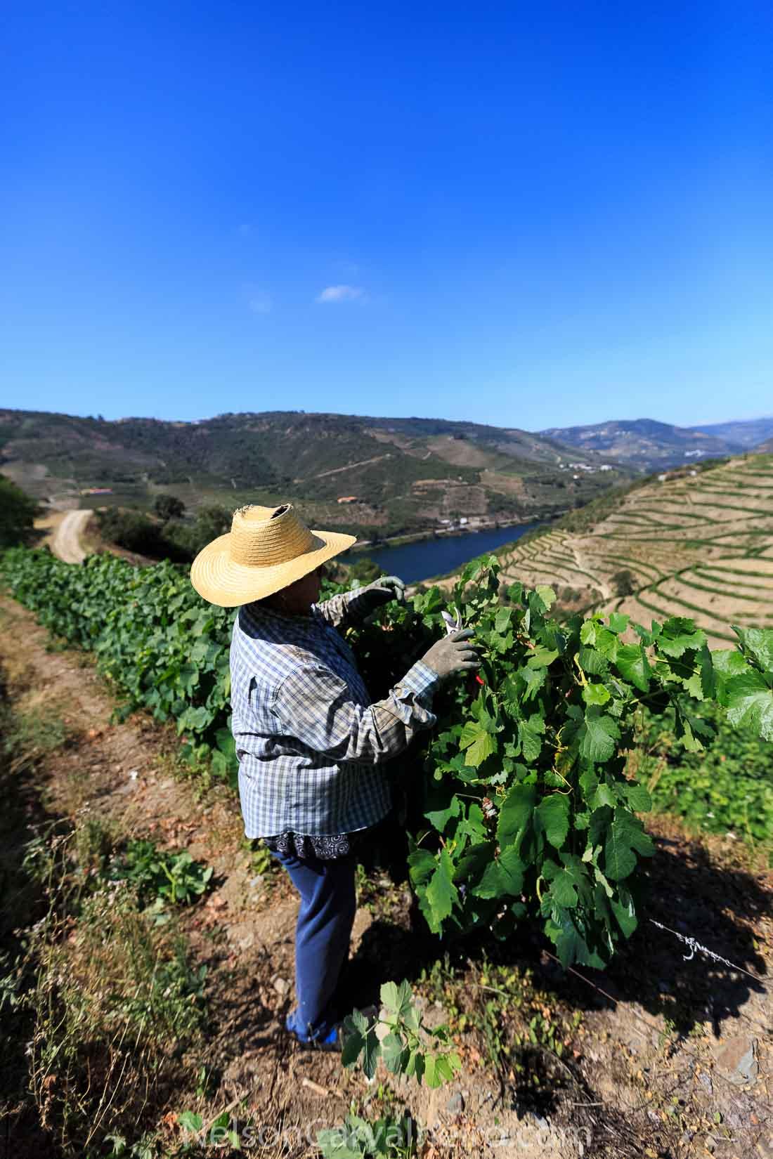 nelsondouro23, nelsondouro27, best wine experiences in douro, wine tastings in douro
