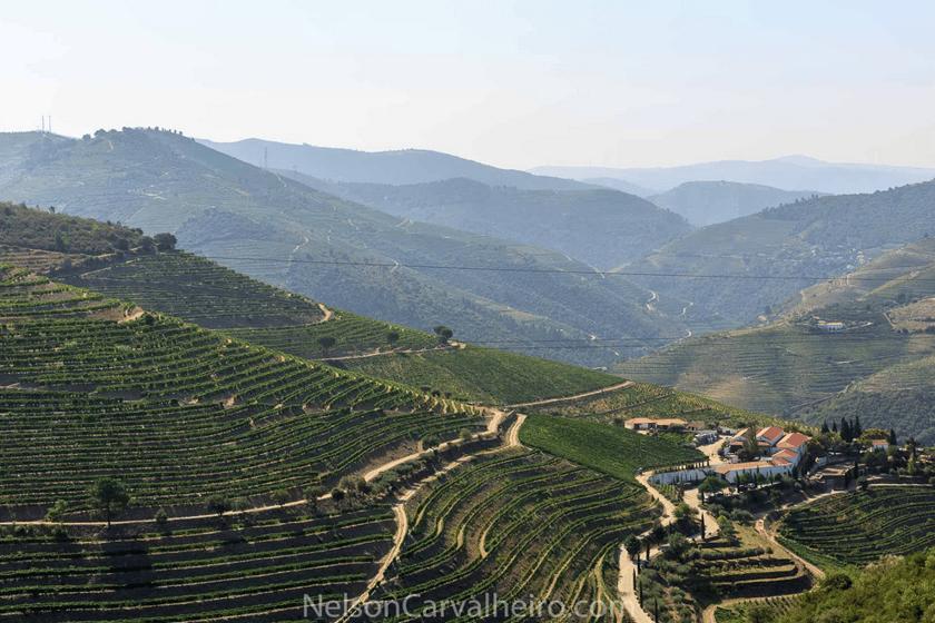 nelsondouro24, nelsondouro27, best wine experiences in douro, wine tastings in douro