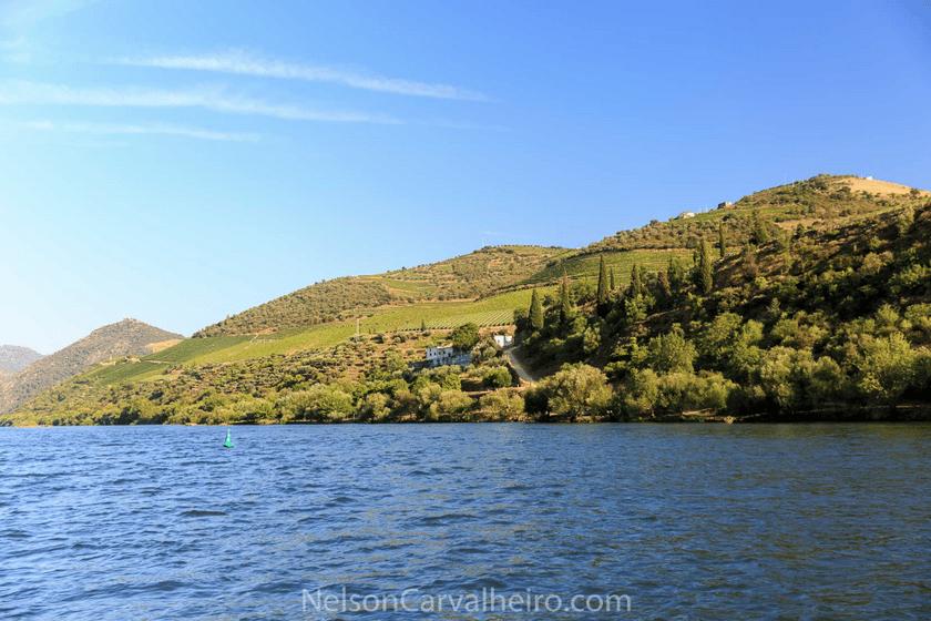 nelsondouro27, best wine experiences in douro, wine tastings in douro