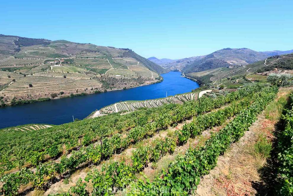 Best wine & Food Experiences in Douro, nelsondouro32