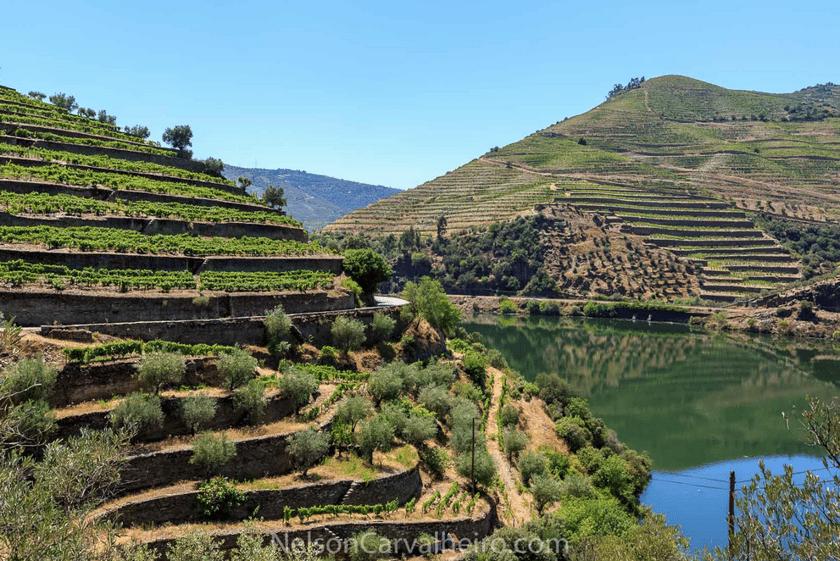 nelsondouro6, douro, douro valley, douro guide, wine travel guide